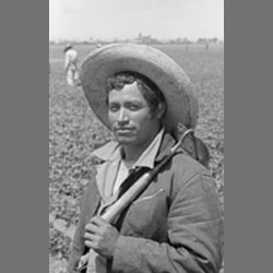 Bittersweet Harvest: The Bracero Program 1942-1964