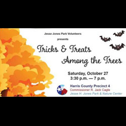 Tricks & Treats Among the Trees